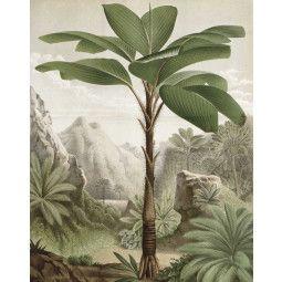 KEK Amsterdam Banana Tree behangpaneel